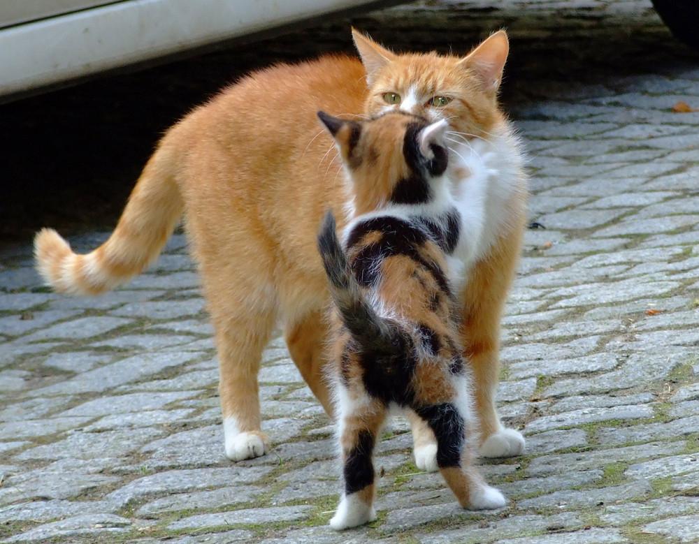 ein Küsschen für die Mama