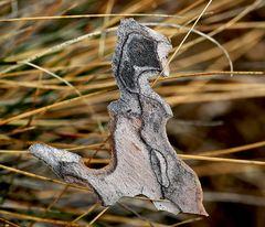 Ein kunstvoll geformtes Schmuckstück aus dem Wald…