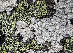 Ein Kunstwerk aus dem Flechten-Paradies! - Une oeuvre d'art du paradis de lichens!