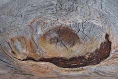 Ein Kunstwerk aus Holz, aber niemand schaut hin... (1) - Une oeuvre d'art sur un banc en bois.