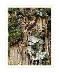 Ein Kunstwerk der Natur....