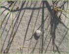 ein lächelnder Stein und Schatten auf der Düne / Kühlungsborn, Ostsee
