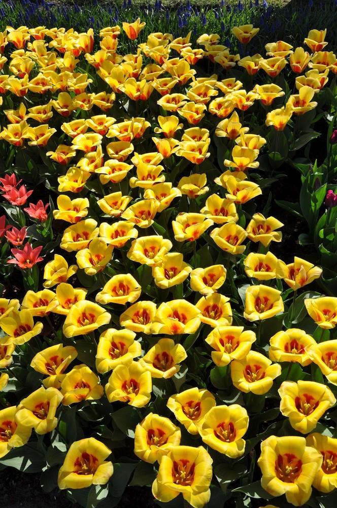 Ein Land voller Frühlingsblumen