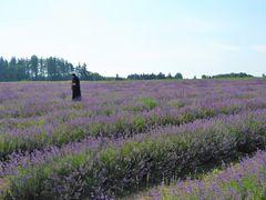 Ein Lavendelfeld...