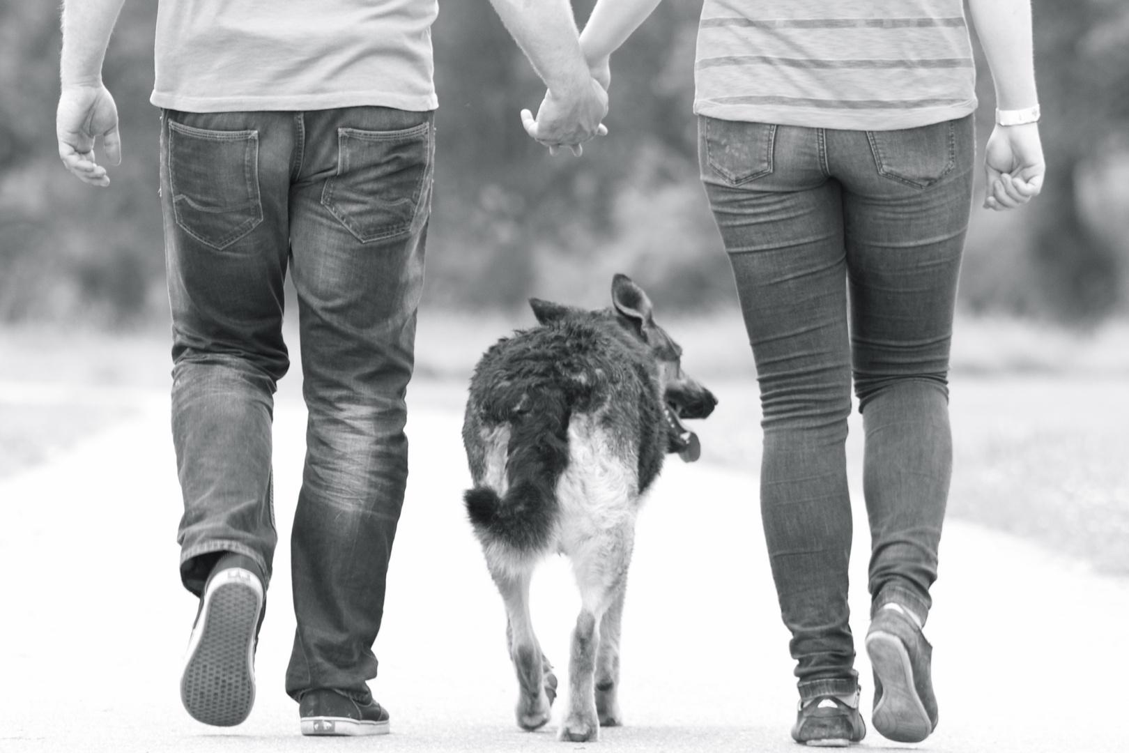Ein Leben ohne Hund ist möglich, aber sinnlos! Foto & Bild ...