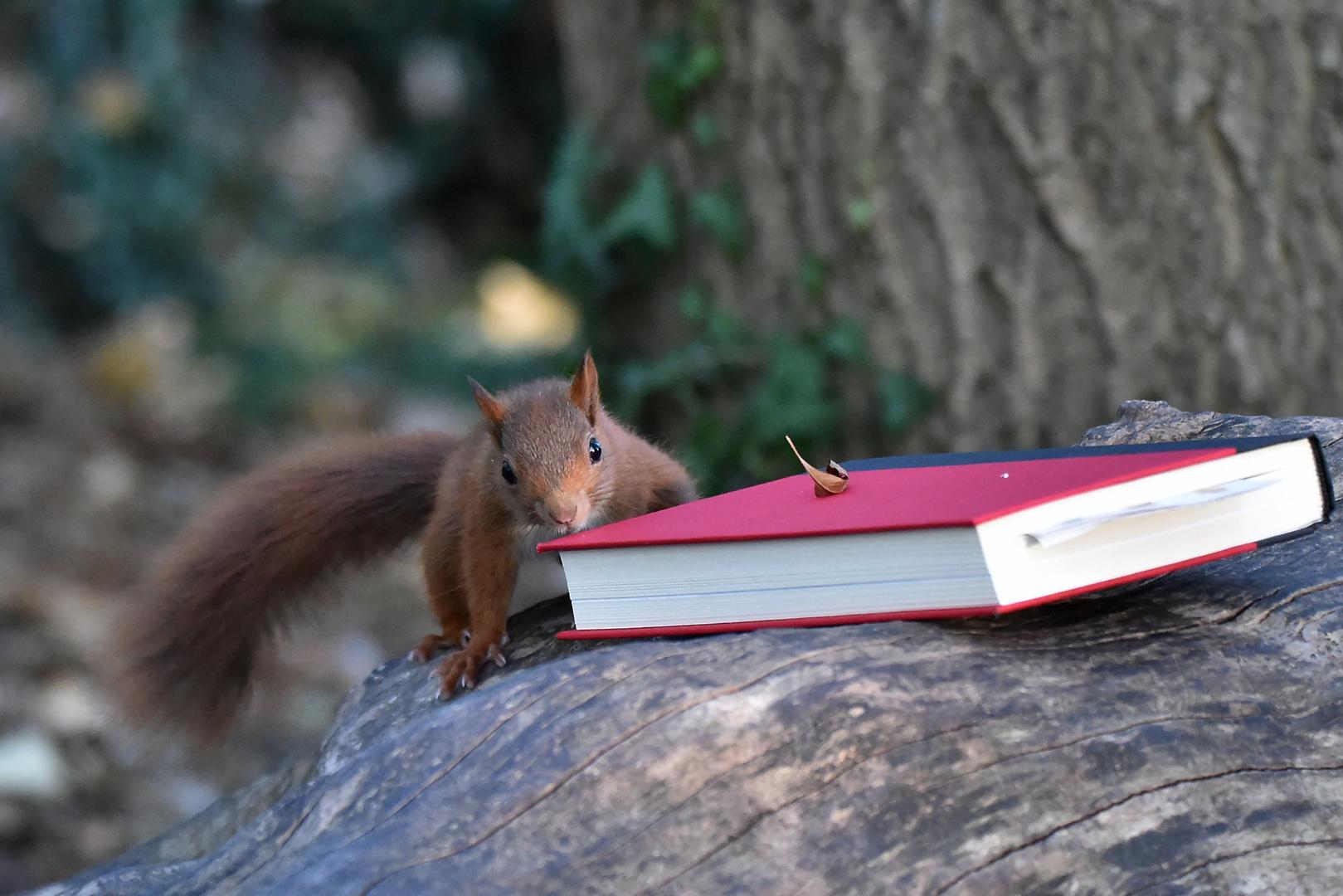 Ein Lesehörnchen