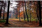 Ein letzter Gruss aus dem Herbst  in Branitz (2)