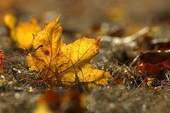 ein letzter Gruß vom Herbst