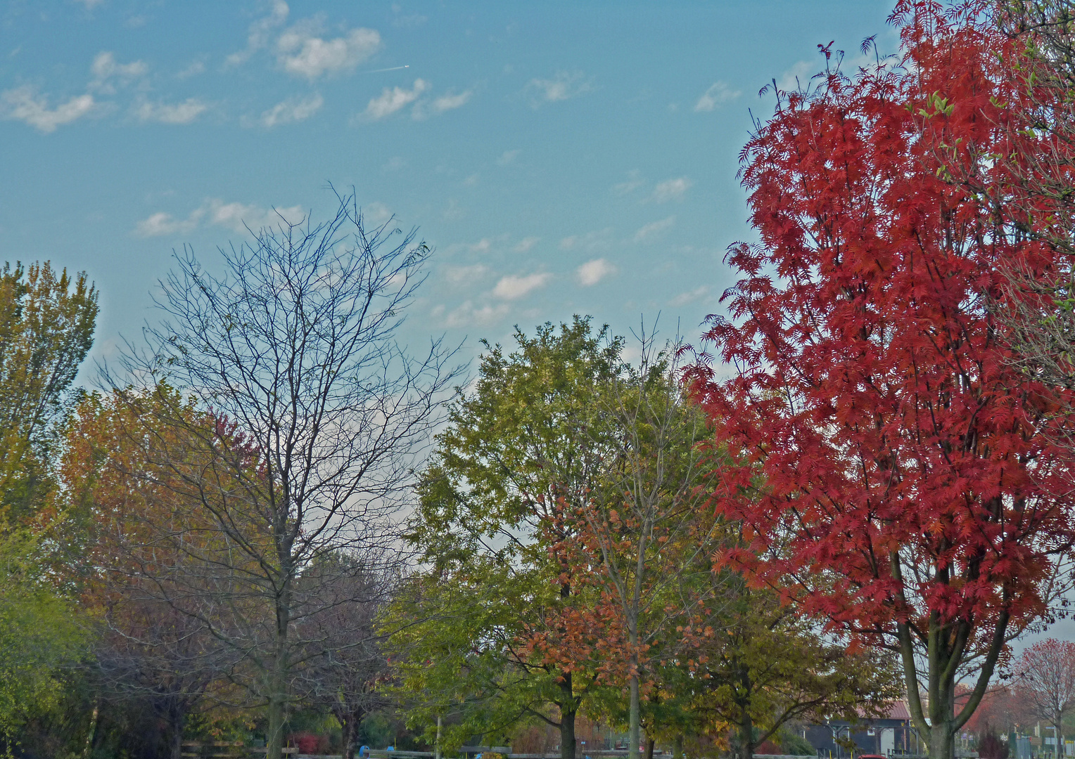 Ein letzter Herbstgruß