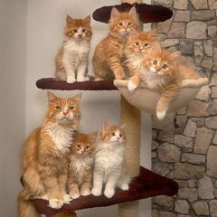 ein letztes Familienfoto