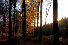 ein letztes Licht im Herbstwald