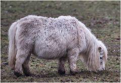 ein letztes Ponyfoto