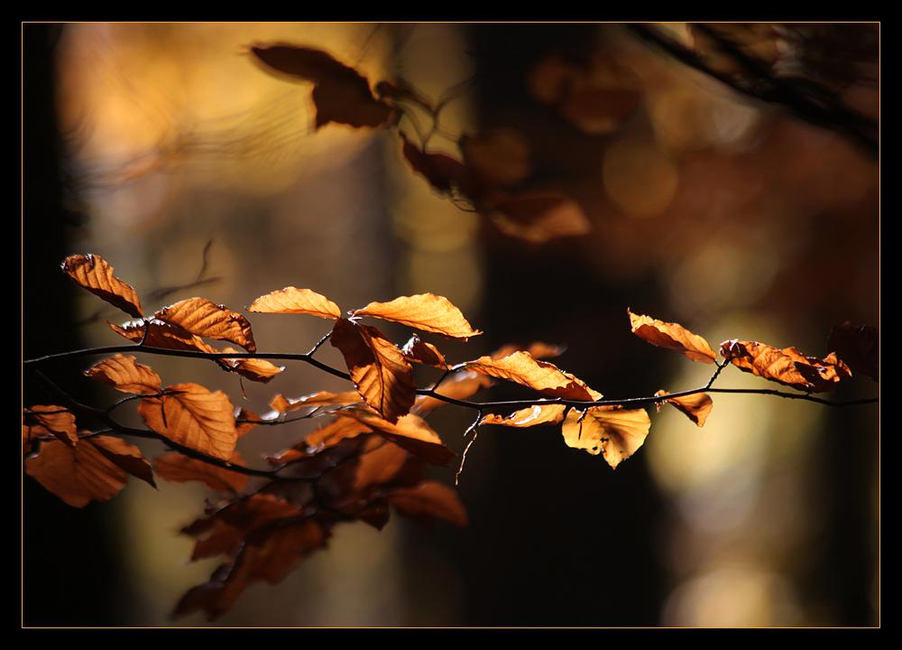 Ein letztes Sonnenblickchen....