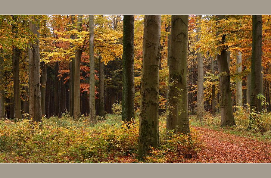 Ein Leuchten im Wald...