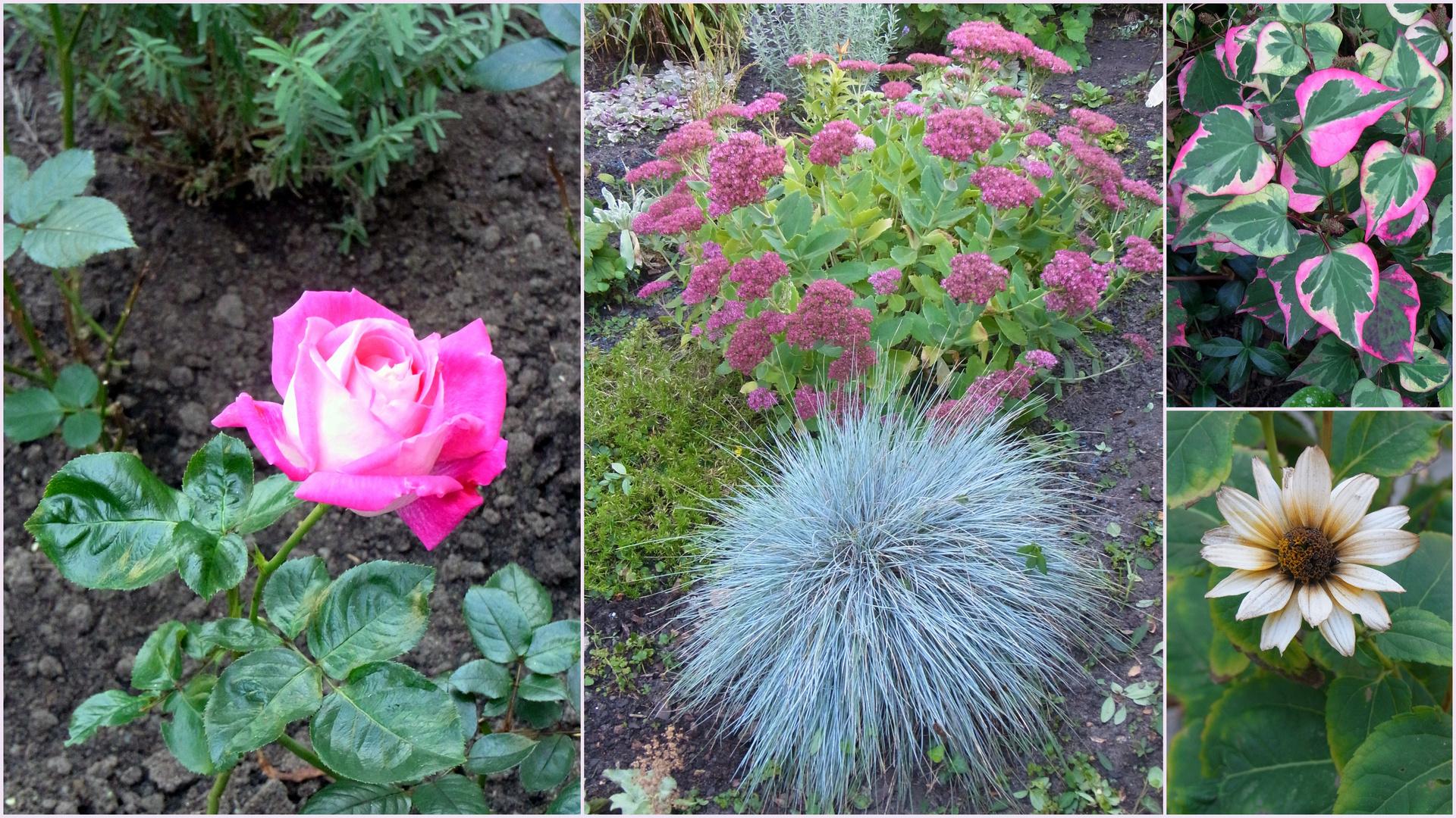 Ein lieber Gartengruß