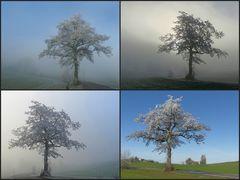 Ein Lieblingsbaum