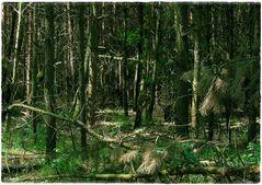 Ein Männlein stand im Walde...