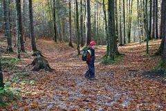 Ein Männlein steht im Walde, oder Herbst im Karwendel