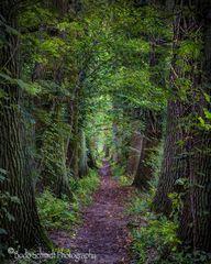 Ein Märchenwald