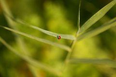 Ein Marienkäfer allein auf weiter Flur