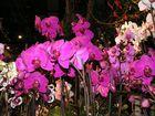 Ein Meer von Orchideen.
