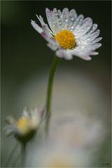 Ein Mittwochsblümchen...