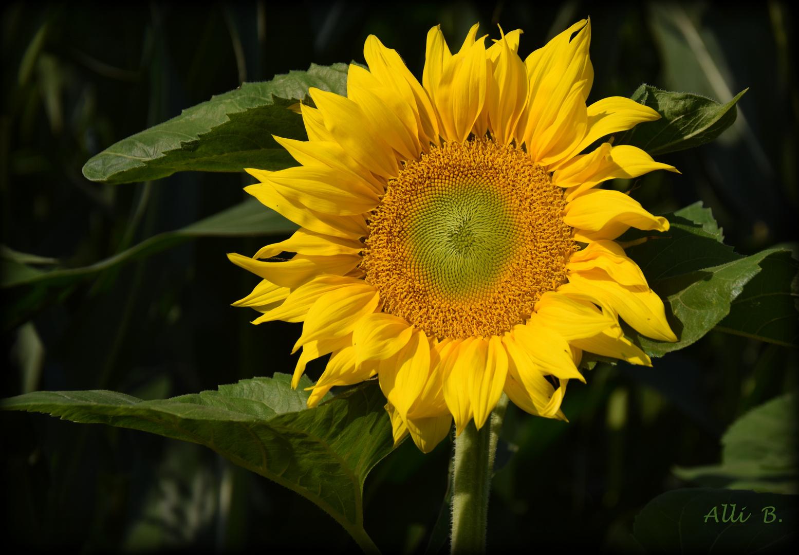 ~~Ein Mittwochsblümchen~~