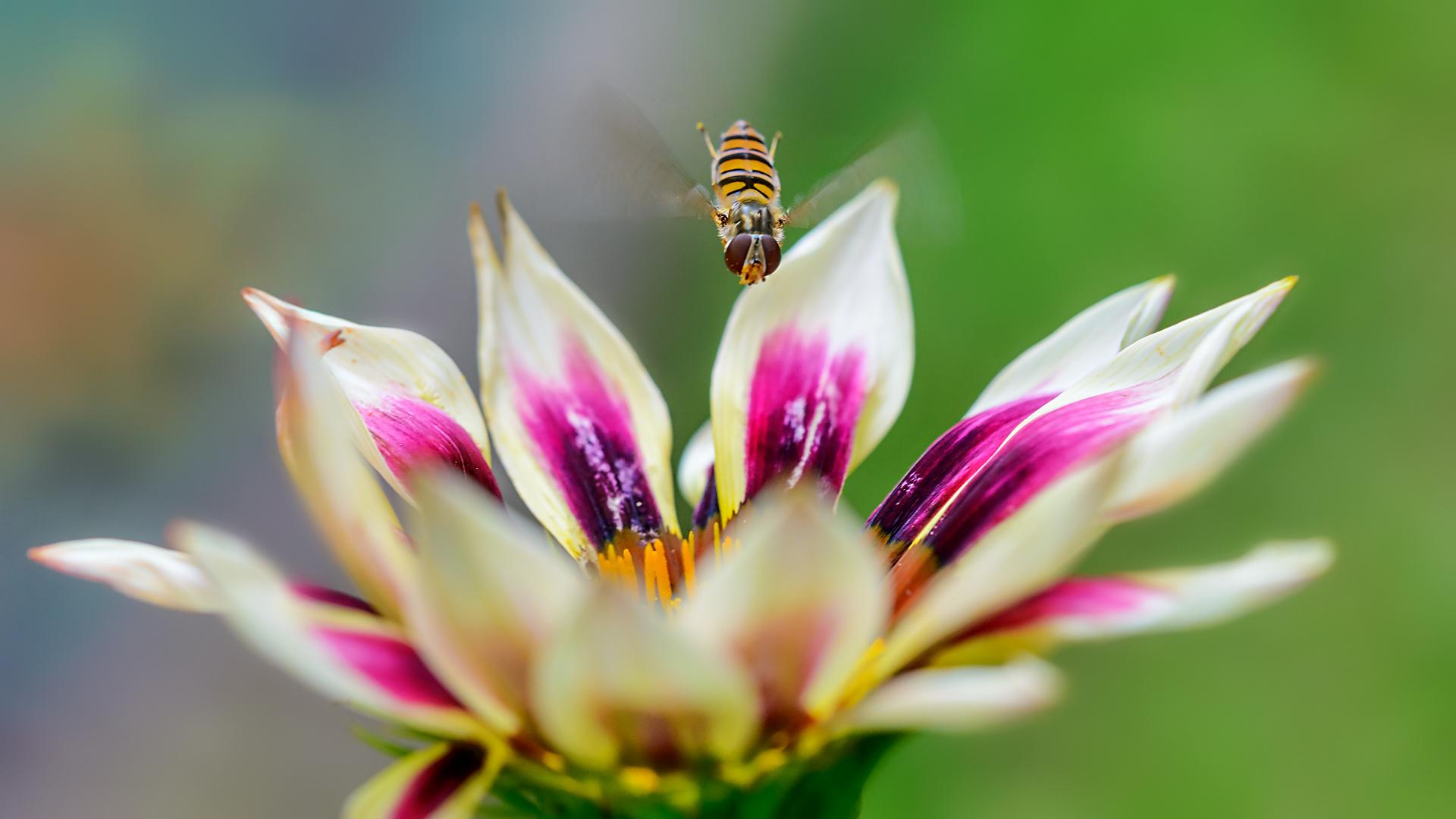 ein Mittwochsblümchen-Flieger