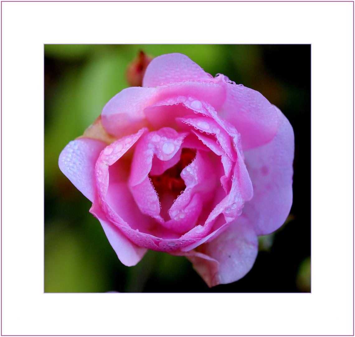 Ein Montagsblümchen...