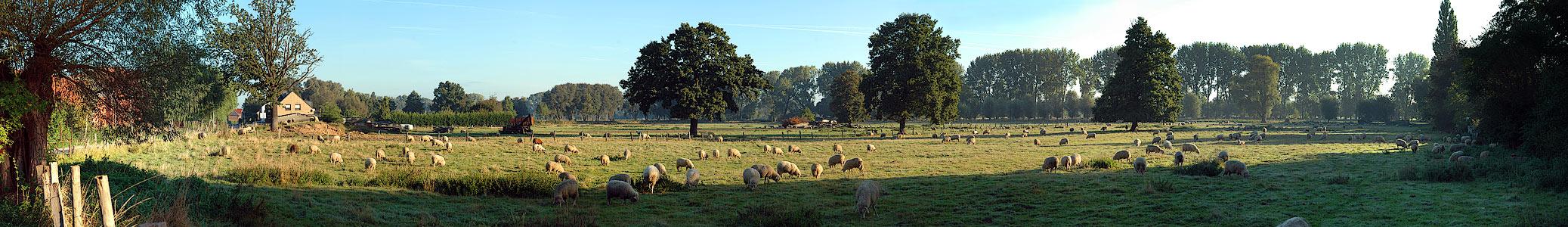 Ein Morgen am Niederrhein...