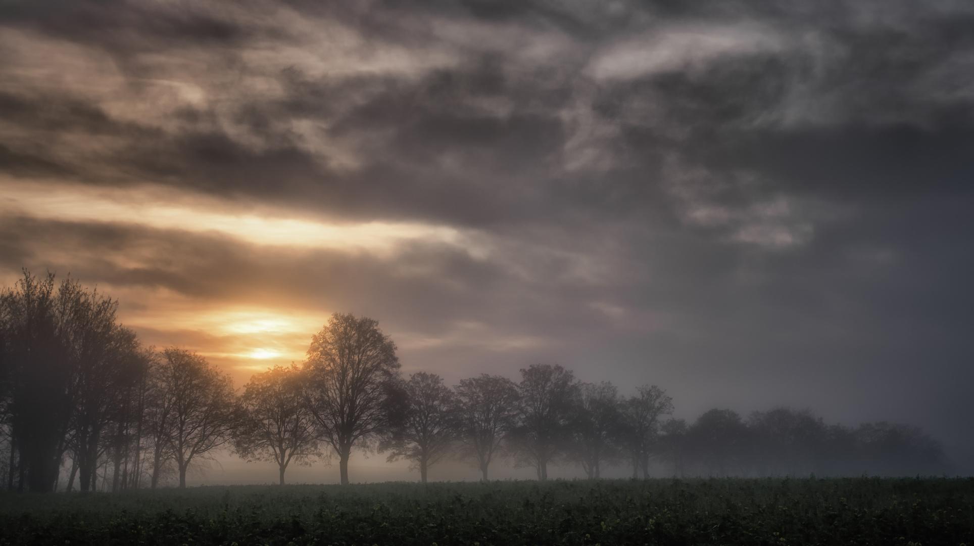 ein Morgen im November