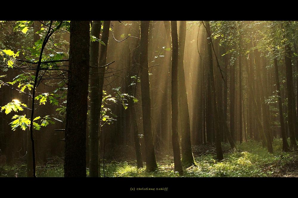 Ein Morgen im Wald 1