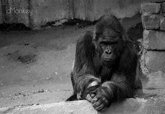 Ein Nachdenklicher Gorilla
