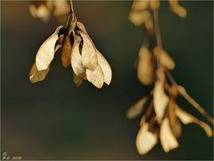 Ein natürlicher Baumbehang ...