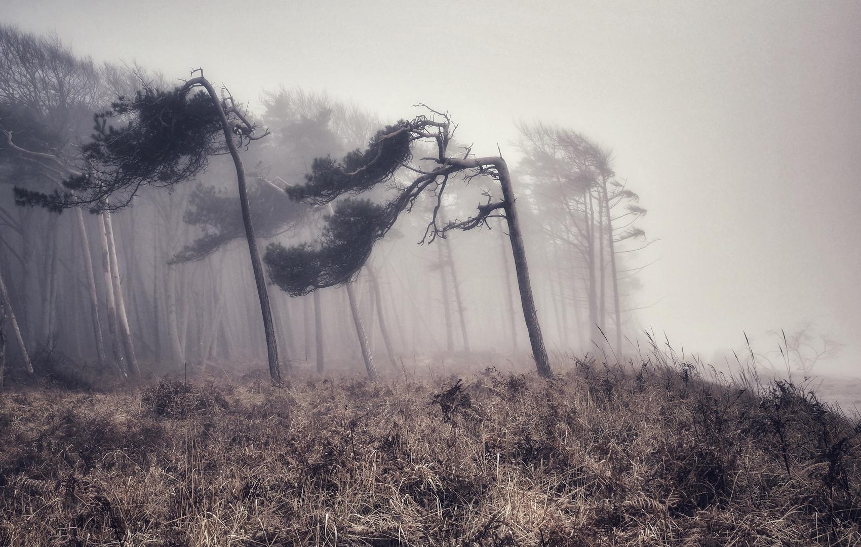 Ein Nebeltag im Norden