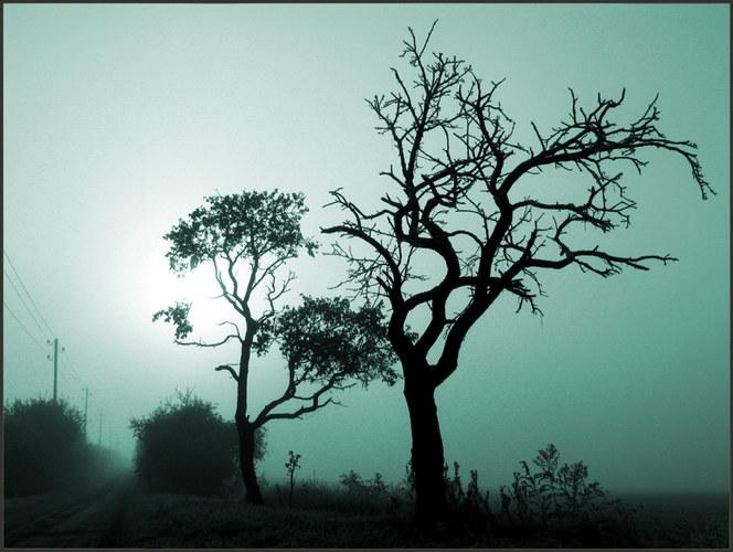 ...ein nebliger Herbstmorgen..