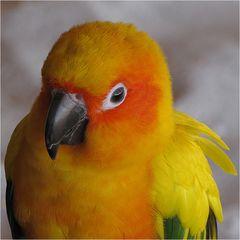 Ein netter Papagei