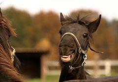 Ein nettes Lächeln......