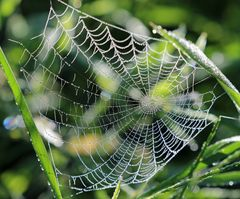 Ein Netz aus Perlen