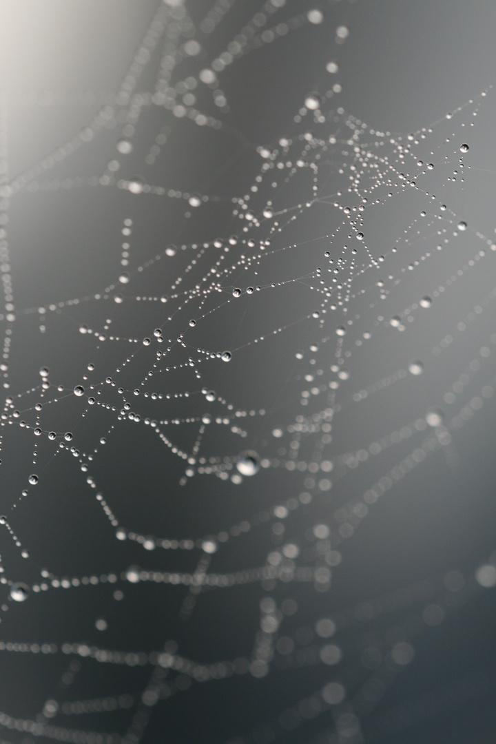 ein Netz im Herbst