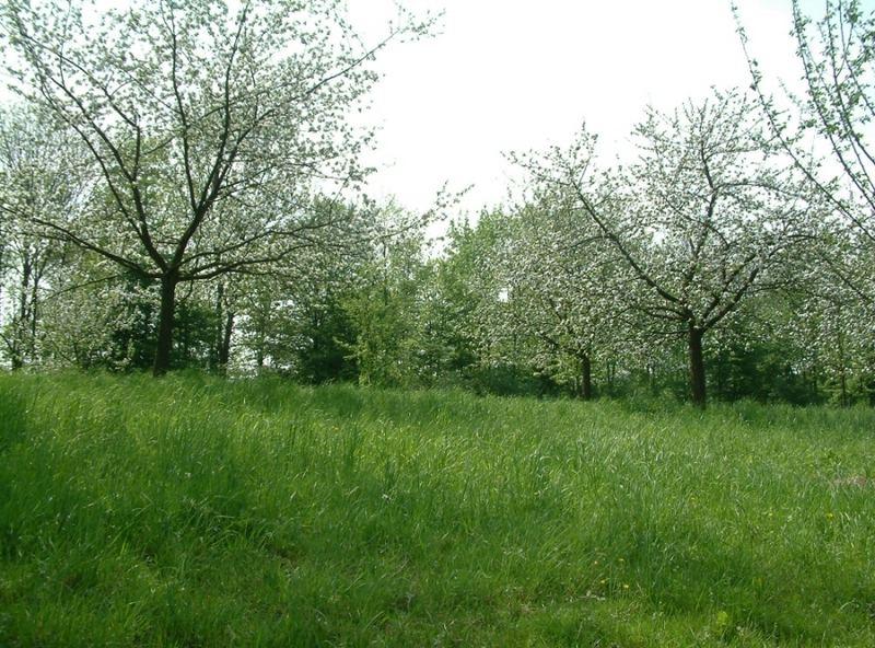 ein neuer Frühling...