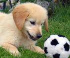 ein neuer Fußballstar ist geboren ...