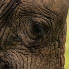 Ein Nickerchen im Stehen - wenn Elefanten träumen...
