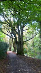 Ein oder Drei Bäume?