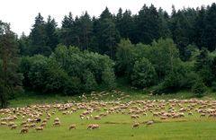 Ein oder zwei schwarze Schafe ...