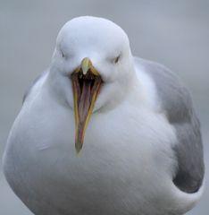 Ein offener Mund am Vogel...