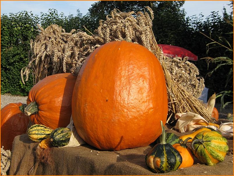 Ein Oktobergruß