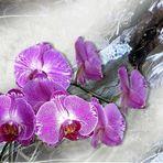Ein Orchidee in Lila......