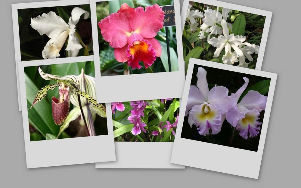 Ein Orchideengruß
