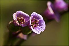 ein paar schlichte Blüten